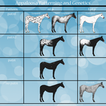 Appaloosa Patterns Genetics Sheet by painted-cowgirl
