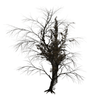 Dark Trees PNG Stock 02 by Roy3D