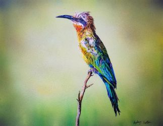 White-Fronted Bee Eater by SRfineArt