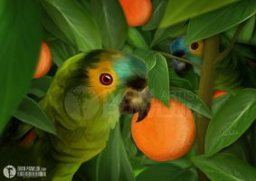 Parrots and Oranges by ipawluk
