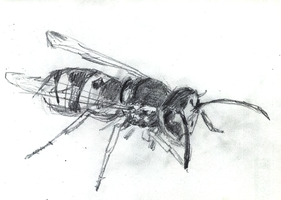 A wasp by sfxdx