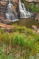 Blackwater Wildflower Falls by somadjinn