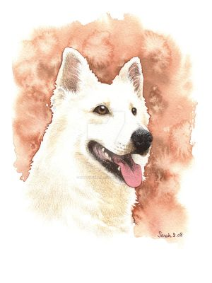 White Shepherd by saraquarelle