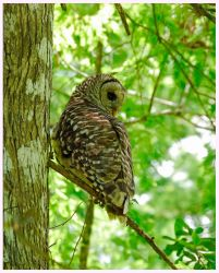 Swampy Owl by RedPangolin