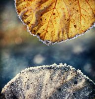 Winter-Autumn by by-gi