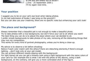 Tips about cats photography by donia