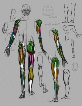 Anatomy Demo from Online class by FUNKYMONKEY1945