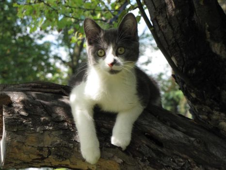 Bailey up a Tree 1080 by CitizenOlek