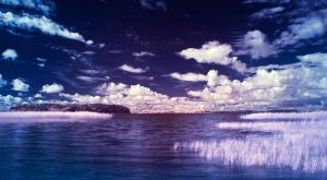 Infrared summer by puu4ux