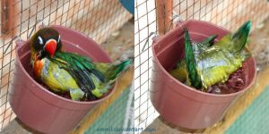 Even in the drinking water bowl... by emmil