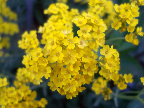 Little Yellow Flowers by TheRealZubes