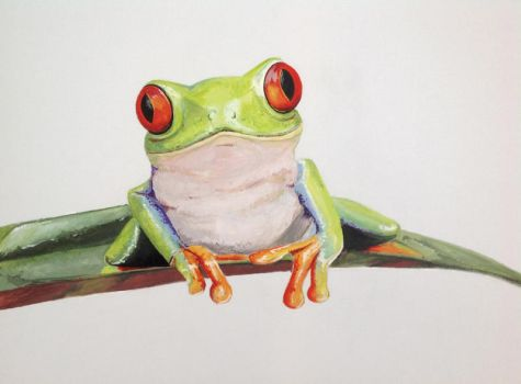 Frog by Claire-Lacaes
