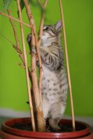 Corrys first tree by hoschie