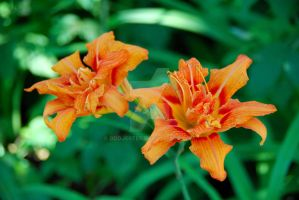 Burst of Orange by oddjester