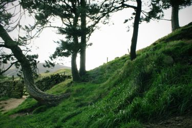 Trees on a Hill by todaywiththeCJB