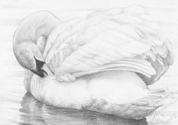 #003: swan by Sillageuse