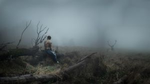 The Call of the Wild by FedericoSciuca