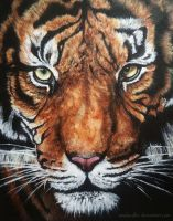 Acrylics Tiger Head by WindsCaller