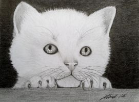 White kitten by Udvardi