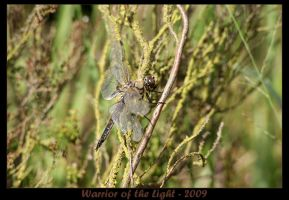 Four-spotted Chaser 2 by WotL