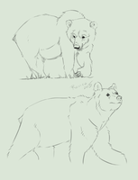 bear sketches by Ravica