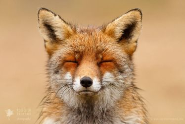 Happy Fox was Happy by thrumyeye