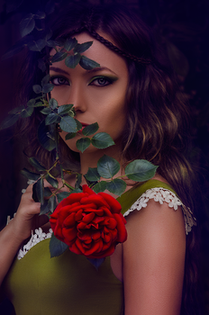 Roses by AncA-P