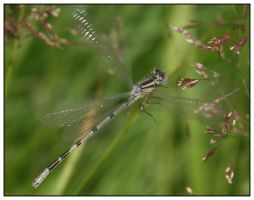 : Another Damsel : by TW1STEDP1X