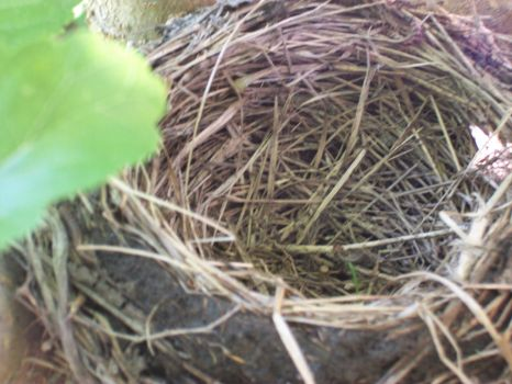 empty nest by blacklotusdying