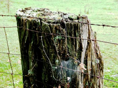 Spider's Home by ecfield