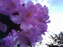 Photogallery 2015 - 17 purple flower by Ingnition by Ingnition