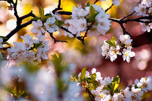 Spring 3 by Ajay-L