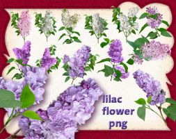 Lilac Flower by roula33