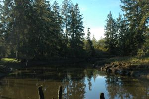 the little hoquiam river by Blood-Red-Crystal