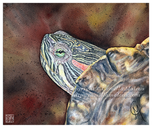 Red-eared Slider by CamillaMalcus
