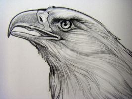 Bald Eagle Pencil Detail 2 by HouseofChabrier