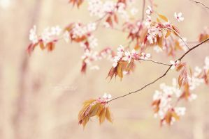 Pink Blossom by FreyaPhotos