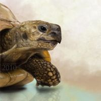 Turtle by FedeSchroe