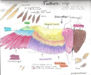 Feathers Tutorial 1: Wings by MaximWolf