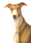 Whippet by SolarXolverite
