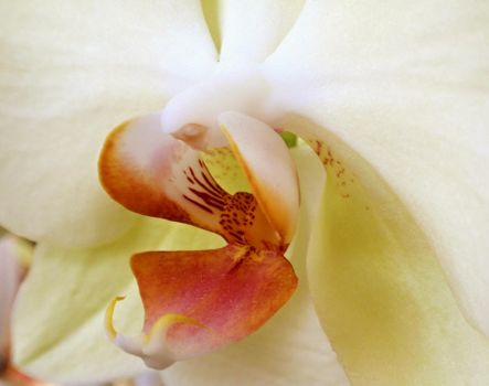 orchid by duckpondevans