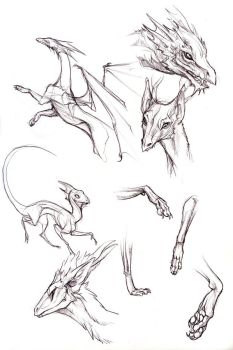 Dragon doodles by hibbary
