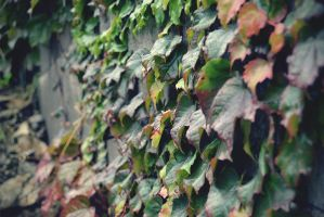 Leafs Leafs.. by Zoroo