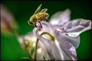 The busy bee by calimer00