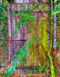 The tree and the door
