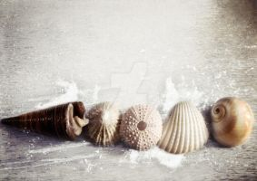 Sea Shells by the Sea Shore by MagpieMagic