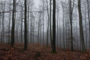 Foggy Forest 30 by sacral-stock