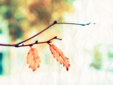 autumn twins by sOLie-photo