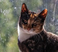 Speckles and oh a cat too by photodeus