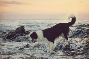 Barney at Sunset by micromeg